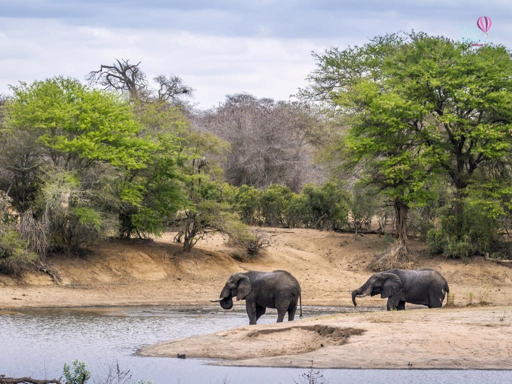 Vista do Rio Sabie no Kruger Parque com elefantes
