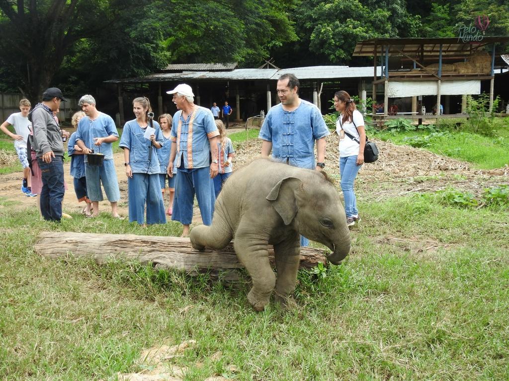 Elephant farm - Chiang mai