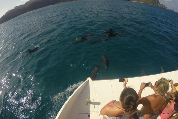 Passeio com Golfinhos Noronha