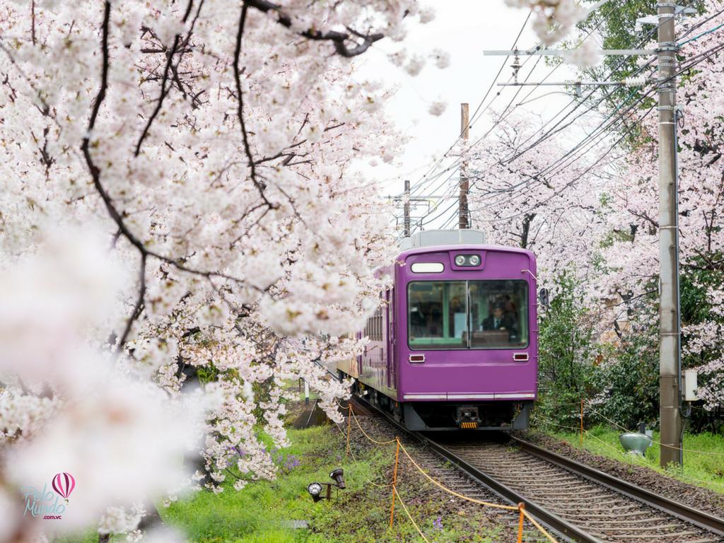 TRANSPORTE PÚBLICO NO JAPÃO trem comum kyoto