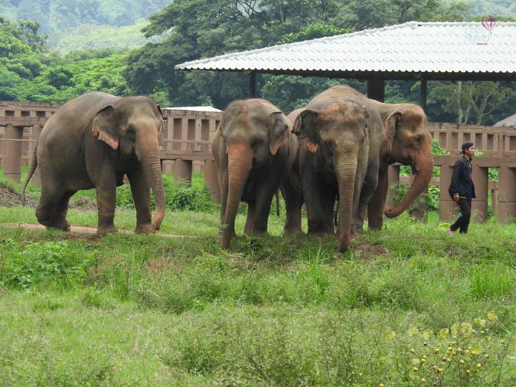 Passeios em Chiang Mai, Elephant farm, Chiang mai